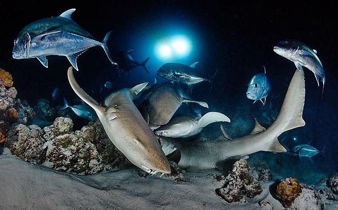 Ночной дайвинг,night diver,night dive,ночные погружения,ночное погружение,ночные погружения организация подводной,погружения ночью,обучение ночное погружение,курс ночное погружение,курс deep diver,deep diver padi,deep diver ndl