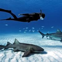 Дайвинг с акулами погружение с акулами