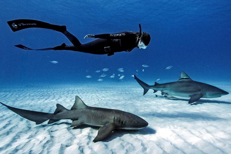 дайвинг с акулами,погружение с акулами,дайвинг китовыми акулами,дайвинг китовой акулой,дайвинг акулами видео,дайвинг с акулами,дайвинг с белой акулой,погружение к акулам,мир акул погружение,погружение с белыми акулами,акула глубина погружения,сколько стоит погружение с акулами,мир акул глубокое погружение